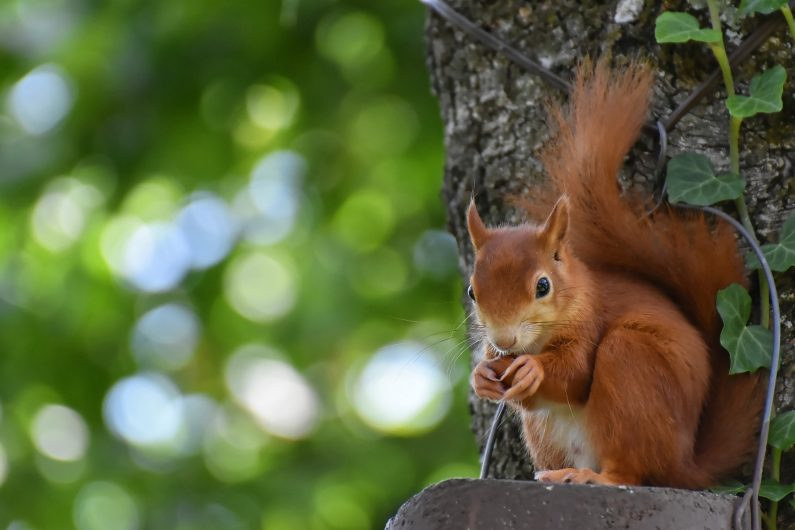 écureuil sur un arbre perché