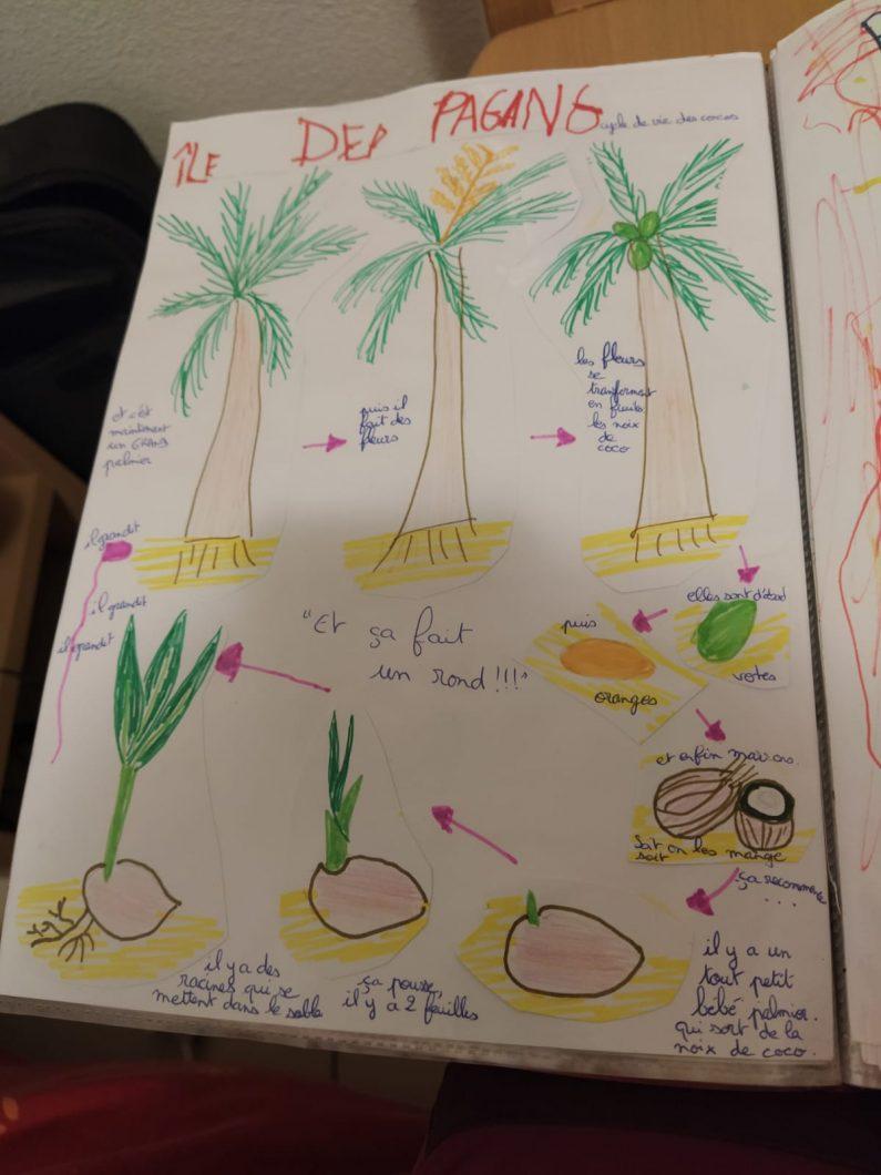 Carnet de voyage cycle de vie palmiers
