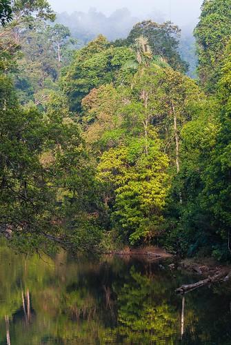 La forêt primaire de Taman Negara