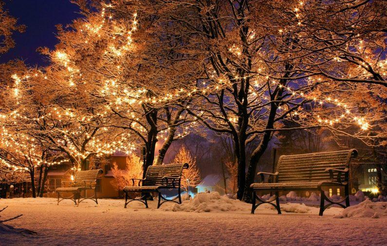 arbre lumineux de yule